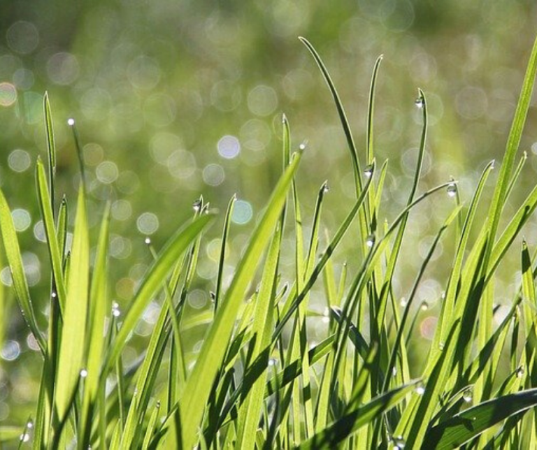 Morning dew on grass field