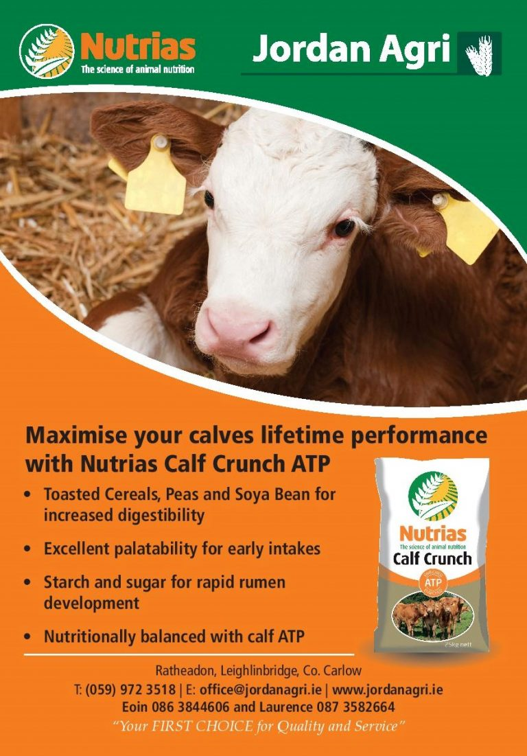 Calf Crunch infographic